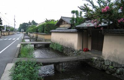 Shakanishi1