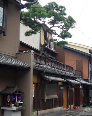 Kamisichi8