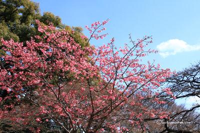 Koishikawa11