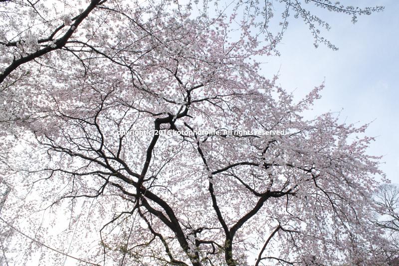 15_100403kyoto_278