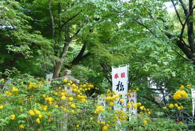 Matsuo1