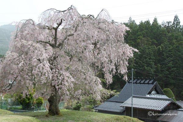 Joushoukouji1