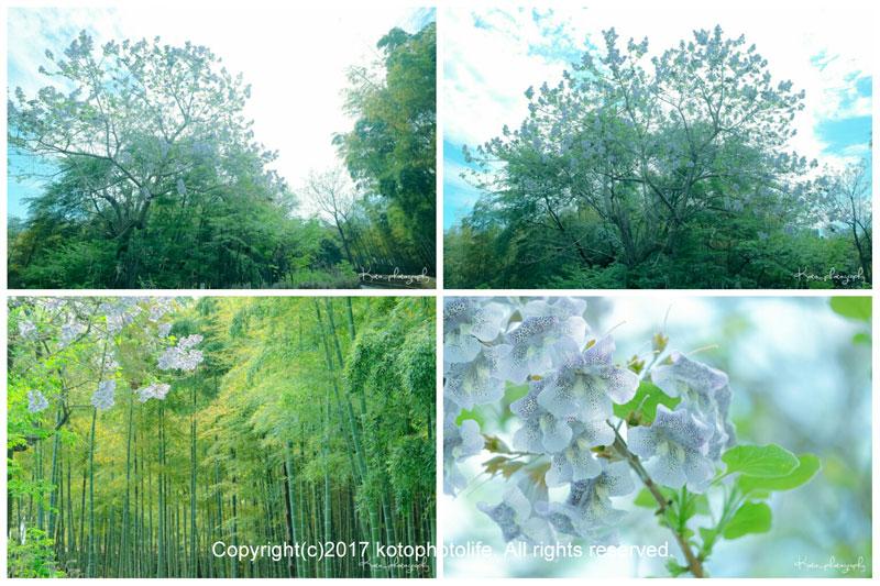 3_photogrid_1494076056928